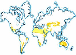 Çöl İklimi Haritası
