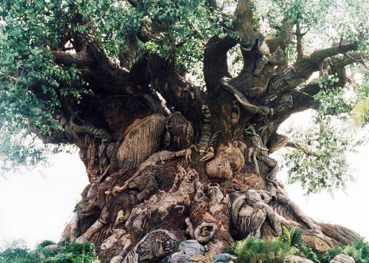 Abanoz Ağacı