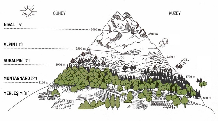 Alpin Kuşak