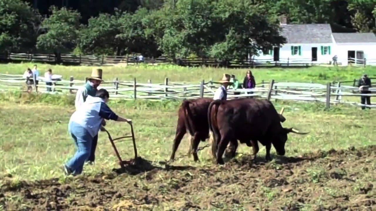 Ekstansif tarım