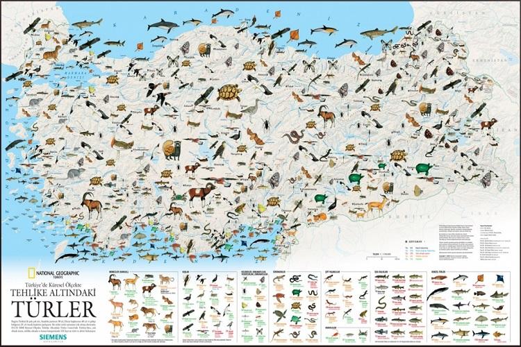 Ülkemizde Soyu Tükenmiş ve Tükenmekte Olan hayvan Türleri
