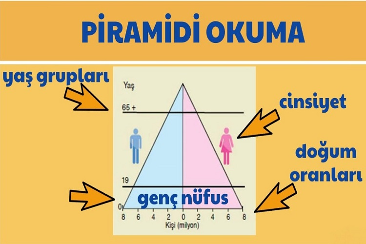 Nüfus Piramitlerinin Anlattıkları