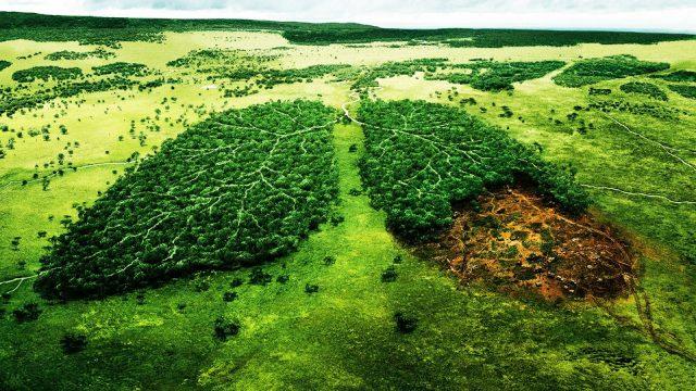 Ülkeler arasında doğal kaynak kullanımındaki farklılığı çevresel sonuçları