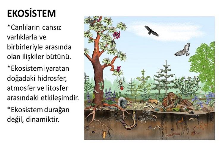Ekosistemlerin İşleyişi ve özellikleri